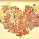heart-of-glassmade-from-red-fan-coral-collected-in-mexico1-150x150