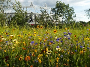 2012_london_olympic_park_wildflower_meadow