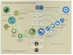 Circular-Economy-Concept